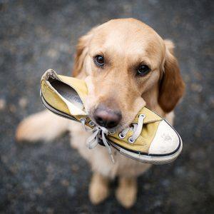 rieduca-il-tuo-cane