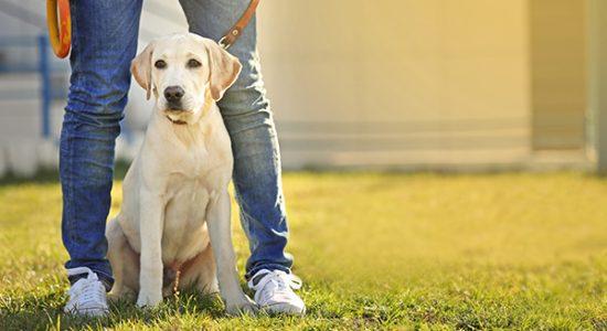 corsi di addestramento individuali cani in affido